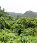 Forêt de Taveuni, Fiji © Tim O'Shea