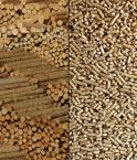 Pellets ou granulés de bois © Friedrich Böhringer