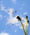 pollinisation_usa