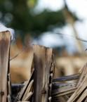 Pétrole et forêt amazonienne ne font jamais bon ménage. © Carl Durocher