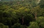 Au Brésil, la déforestation de l'Amazonie marque le pas, et la protection des espaces naturels s'est considérablement améliorée. © Phil P Harris (Wikimédia Commons)