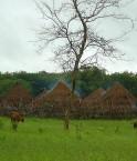 Grâce à l'annulation de la dette, la Guinée-Bissau va pouvoir investir dans l'agriculture. © Francofranco56 (Wikimédia Commons)