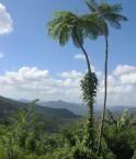 région de Baracoa