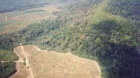 La multiplication des projets en Amazonie détruit des vestiges archéologiques uniques au monde, faute de service d'archéologie préventive. © Bunks (Wikimédia Commons)