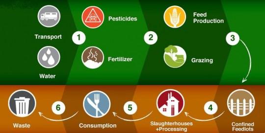 Le cycle de la viande et ses impacts.