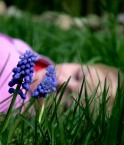 Green Dream. © Pink Sherbet Photography (Flickr.com)
