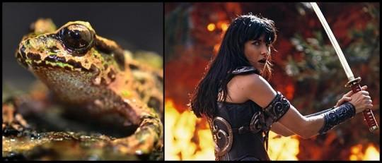 Xena et sa grenouille.