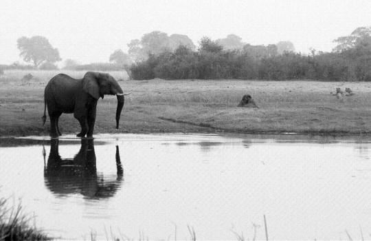 Delta de l'Okavango.
