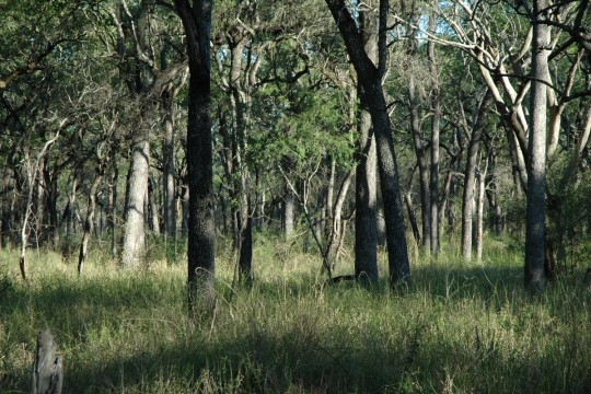 La forêt sèche argentine.