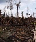Dégâts du pétrole au Nigéria. © Sosialistisk Ungdom (SU) (Flickr.com)