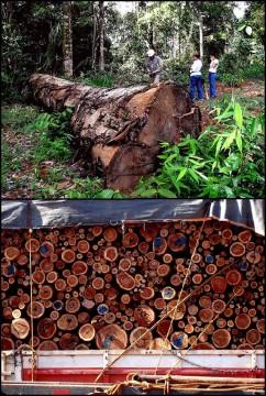 La déforestation en Amazonie.