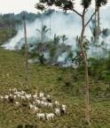 Incendie 2009 dans l'Etat du Para. © Andre Penner (AP)