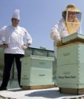 Apiculture au Royal York Fairmont. © Royal York Fairmont Hotel