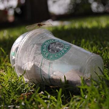 Gobelet Starbucks. © half alive - soo zzzz (Flickr.com)