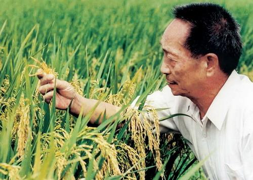 Yuan Longping.