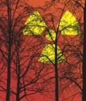 Forêt radioactive. © UTNE