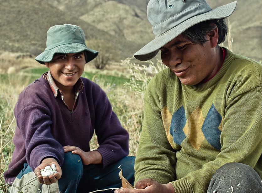 Agriculteurs de Salta.