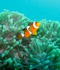 Une étude australienne démontre que les émissions de CO2 ont un impact sur les système nerveux des petits poissons. ©Thomas Quine (Flickr)