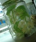 Des scientifiques argentins ont créé un soja OGM capable de pousser en zone©Dinesh Cyanam (Flickr)