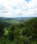 La forêt reprend peu à peu ses droits au Vietnam. ©Ms Jackson (Flickr)