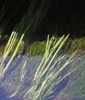 Des algues pourraient &#169 Jmarnaud (Flikr)