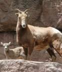 USA Zoo de Denver