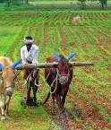 Les paysans indiens souffrent ©ananth