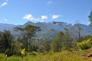 Melanesie - Dommages d'une deforestation abusive