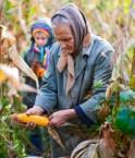 Constitution anti-OGM vers la fin de l'exception équatorienne?