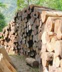 Deforestration Afrique