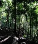 jungle obscure solution avec une lumière verte