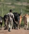 agriculture_afrique