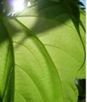 plantes_botanique_nature