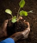 Agricole Afrique