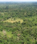 Liberia_tropical_forest