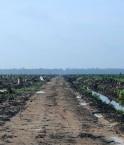 déforestation indonésie