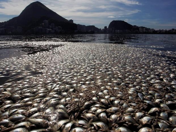 poissons-morts-lagune.jpg