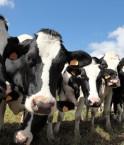 l'agriculture mondiale émet de plus en plus de gaz à effet de serre