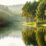 Le gouvernement veut mieux lutter contre les atteintes à l'environnement