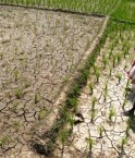 INDIA-ECONOMY-WEATHER-FARM-MONSOON