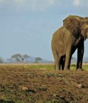 2048x1536-fit_elephant-parc-national-mikumi-tanzanie-14-octobre-2013