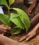 Economie verte Côte d'Ivoire