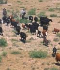 Prairie mexicaine et bétail