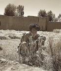 Un vieil afghan assis devant des épis de blé
