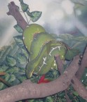 Un serpent à l'Institut Butanta