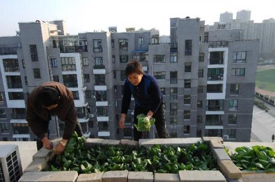 Agriculture urbaine en terrasse en Chine.