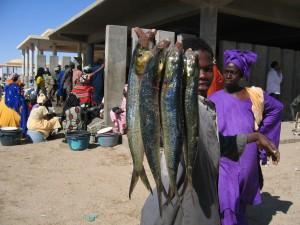 Le marché aux poissons de Nouakchott