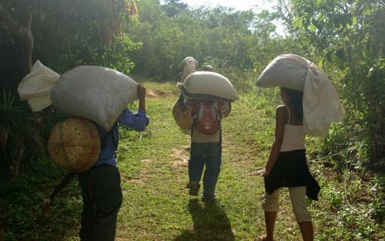 Récolte de café bio à Tacuba.