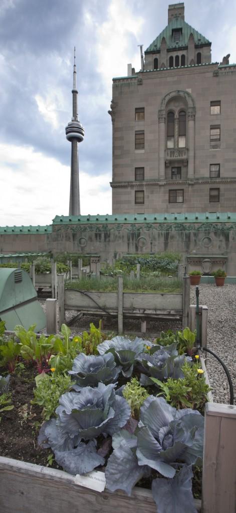 Agriculture urbaine et CN Tower.