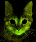 Chat fluo.